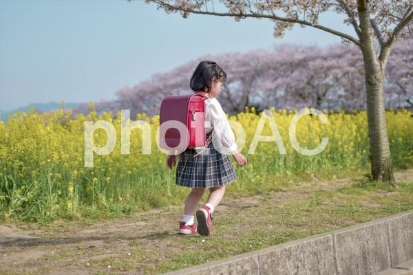 ランドセルを背負う女の子の写真