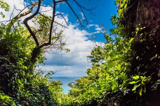 斎場御嶽 世界遺産 トンネル 海 太平洋 沖縄 トロピカル 神秘的 緑 観光客 観光地 すきま 雲 青空 植物 森 風景