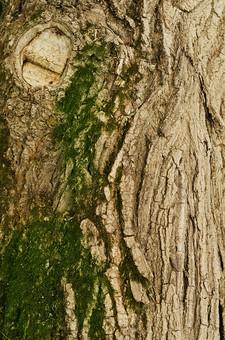 木 大木 模様 太い木 太い幹 幹 皮目 気の模様 顔 樹木 自然 植物 コケ 緑 森 森の中 固い木 茶色 こげ茶色 灰色 溝 でこぼこ 濃い緑 夏 山 山の中