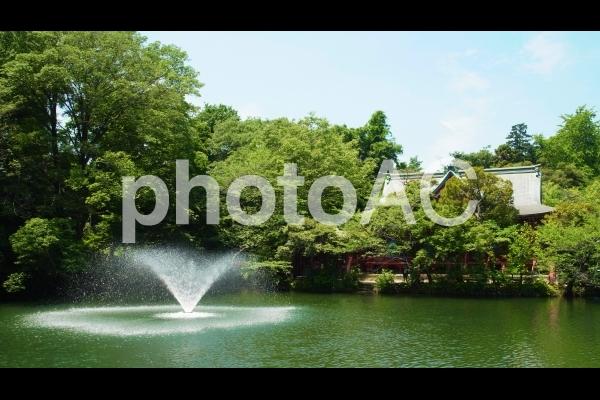 新緑の井の頭公園09の写真