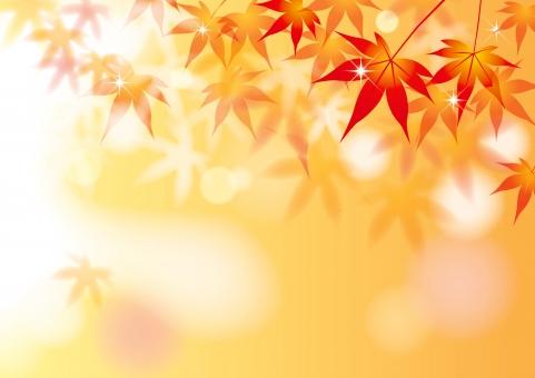 紅葉 もみじ 秋 背景 風景 木漏れ日 光 赤 橙 バックグラウンド テクスチャー 和風 日本 植物 葉っぱ 夕暮れ 夕日 秋イメージ 木洩れ日 こもれび キラキラ 落ち葉 モミジ 10月 11月 10月 11月 イラスト テンプレート 壁紙 ちらし ポスター 季節 メッセージ カード メッセージカード 招待状