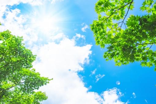 緑と青空と太陽の写真