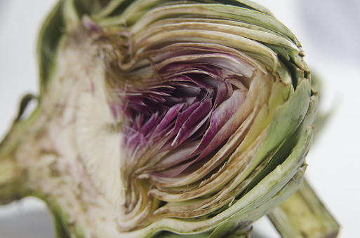 アーティチョーク キク科 チョウセンアザミ属 多年草 チョウセンアザミ 朝鮮薊 つぼみ 花菜類 植物 野菜 食料品 食品 食べ物 食べる 健康 フレッシュ 新鮮 自然 ダイエット 食材 農業 収穫 栄養 食物繊維 カット 半分 紫 アップ むらさき 葉 白バック 白背景