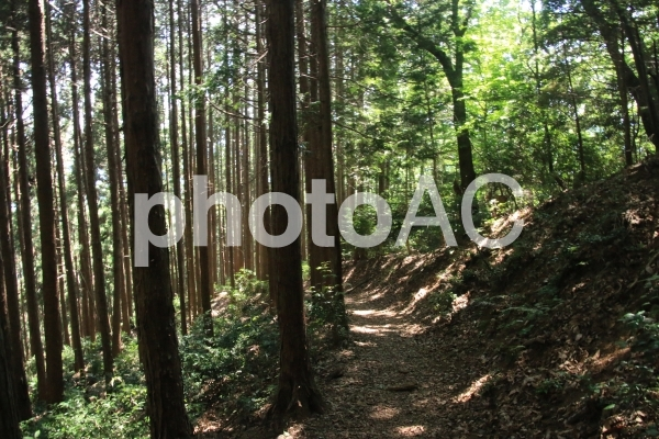 登山道の写真