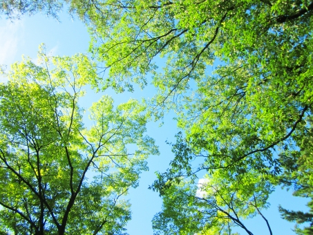 空と木々 長野の写真