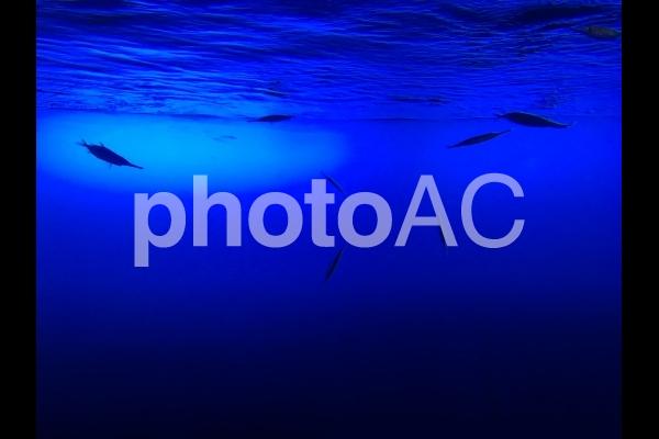 魚たちの写真