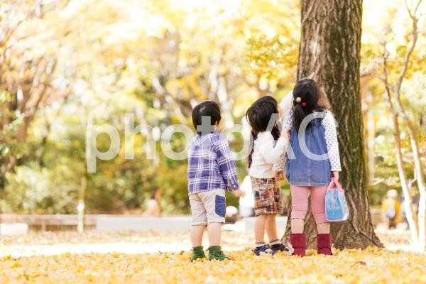 秋の公園で遊ぶ子どもたちの写真