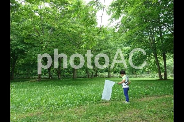 森で虫捕りの写真