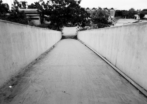 自然 植物 木 樹木 葉 葉っぱ 緑 林 森 森林 空 建物 建築物 建築 通路 歩道 橋 陸橋 真っ直ぐ 続く 土 地面 風景 景色 景観 室外 屋外 無人 白黒 モノクロ