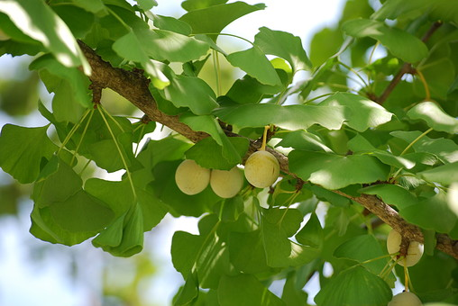 自然 風景 環境 植物 花 草花 観葉 手入れ 栽培 世話 水やり 植える 育てる ベランダ 庭 林 公園 花壇 癒し 咲く 開花 成長 土 観察 アップ たくさん きれい 美しい 木の実