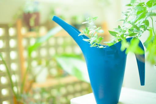 自然 植物 葉 葉っぱ 緑 観葉植物 観賞 ぼやける ピンボケ 植木鉢 入れ物 プランター 青 飾り ディスプレイ 置く アレンジメント テーブル 棚 成長 育つ 加工 アップ 無人 室内 屋内 景観
