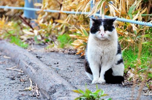 cat ヘタレ 怖い 恐い おそろしい びっくり 驚く 猫 ネコ ねこ 猫の手 顔 クリクリ カメラ目線 表情 鼻 ヒゲ 頭 家猫 飼い猫 室内猫 見つめる 自然 覗き込む 可愛い かわいい 目が大きい ビックリ 驚き かしげる ちゃこ 動物 白 野生の猫 野生の生き物 ハングリー