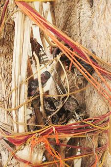アート 芸術 美術 飾る ディスプレイ 自然 植物 木 樹木 樹皮 茶色 紐 ヒモ 糸 ロープ 結ぶ オレンジ色 橙色 赤色 縛る ごちゃ混ぜ 密集 集まる 多い 沢山 風景 景色 ヒビ 割れる 枯れる 成長 育つ 伸びる
