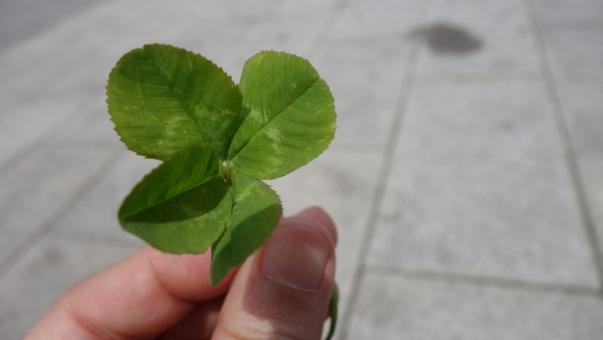 クローバー 四つ葉 幸運 ラッキーチャーム 緑 幸せ