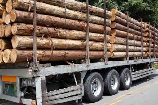 丸太 製材所 材料 原木 木 材木 木材 伐採 杉 トラック トレーラー 荷台 運ぶ 輸送 切り出す 伐り出す 切り出し 切出す 杉の木 スギ スギの木 林業 農林水産業 産業 自然 年輪 断面 樹皮 木肌 素材 乾燥 質感 茶色 間伐材 積む 積上げる 積み上げる 丸い 太い 森林 森 沢山 たくさん ワイヤー 屋外 ビジネス 運搬 搬出 無人
