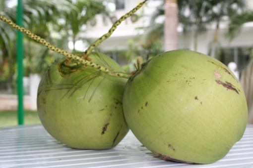 ココナッツ ヤシ の 実