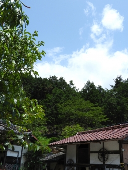 田舎 田舎の夏 夏 いなか 地方 初夏 夏空 夏色 木立 木 長い 空 雲 背景 素材 材料 自然 7月 8月 縦 スペース 余白 植物 風景 家 住宅 家屋 屋外 外 はれ 晴れ 晴天 倉庫