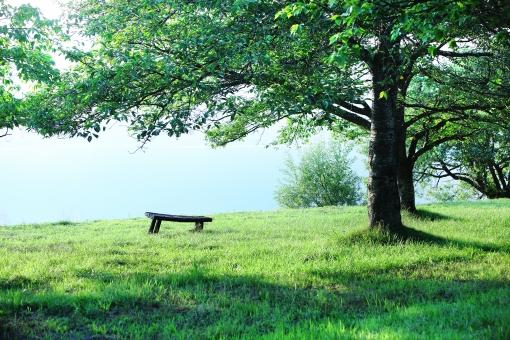 自然 植物 樹木 新緑 若草 初夏 グリーン リゾート ベンチ 湖畔 五月 木陰 木漏れ日 光 休日 野外 クリーンなイメージ 新鮮な空気 待ち受け画面 マイナスイオン ポストカード コピースペース 背景 バックグランド