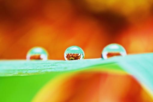 花の映る雫の写真
