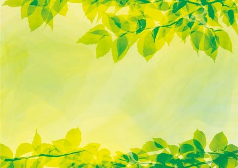 葉っぱ 枠 素材 植物 森林 森 幹 育つ 育てる 草 木 葉 桜 葉桜 茂み 緑色 黄緑色 イエロー グリーン 若葉 青葉 新緑 5月 4月 3月 7月 8月 さわやか 青春 茂る しげる 覆う リーフ ブーケ 前向き 春風 生命力 深呼吸 森林浴 綺麗 きれい 美しい 癒し 癒される リーフブーケ 水彩画 水彩風 水彩 手書き 手描き てがき 滲み にじみ にじむ 透明感 透明 グラデーション 萌黄色 新芽 萌黄 芽吹く エコ 環境 木の葉 風流 登山 キャンプ 植物園 交差 エコロジー そよ風 グラフィック 柔らかい 流れ 自然 休養 林 シルク ライン 曲線 流線 ウェーブ 波 揺らぐ ゆらぐ 揺れる ゆれる 揺らぎ ゆらぎ 潤い感 枝 みずみずしい 瑞々しい 瑞瑞しい マイナスイオン ナチュラル デザイン 爽やか 潤い 太陽 光彩 光 線 寒色 暑中見舞い 暑中お見舞い 残暑お見舞い 初夏 樹木 散歩 低木 夏休み 春休み 壁紙 背景 背景素材 壁紙素材 背景素材フリー 模様 もよう 柄 がら イメージ バックイメージ 装飾 背景デザイン ホームページ webサイト イラスト 下地 ベース バックグラウンド テンプレート コラージュ ペーパーイラスト コーナー フォトフレーム テクスチャ テクスチャー メッセージカード フレーム 飾り枠 シルエット グリーティングカード 案内状 パンフレット 見出し 3月 4月 5月