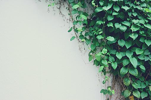 背景 テクスチャ テクスチャー バックグラウンド 背景素材 模様 ポスター グラフィック ポストカード 柄 デザイン 素材  装飾  イラストペーパー  デコレーション 壁 コンクリート 石工 石 ブロック 壁面 ビル 建物 建造物ペンキ ペイント 蔦 つた 植物 葉っぱ