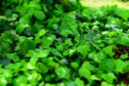新緑 しんりょく 3月 4月 5月 6月 葉 葉っぱ 緑 黄緑 みどり きみどり 自然 綺麗 爽やか 見上げる 人気 植物 樹木 新鮮 森 林 公園 グリーン 暖かい 季節 若草色 若葉 木洩れ日 木漏れ日 こもれび 明るい 気分 最高 気持ちが良い 空気 クリーン 森林浴 背景 テクスチャ 壁紙 バックグラウンド ヒーリング リラックス 癒し マイナスイオン 初夏 夏 春 リラクゼーション 涼しい セラピー エコ eco アップ 接写 至近距離 ミニチュア風 可愛い かわいい 小さい 雑草