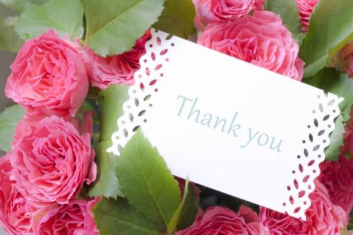 花 植物 ガーリー 可愛い 女子 女子力 清楚 清らか 気持ち やさしさ 優しい 優しさ グリーン 緑 ピンクの花 薔薇 ばら サンキュー お礼 御礼 メッセージカード グリーティングカード チェリーピンク ありがとう 感謝 贈り物 ギフト プレゼント 差し入れ