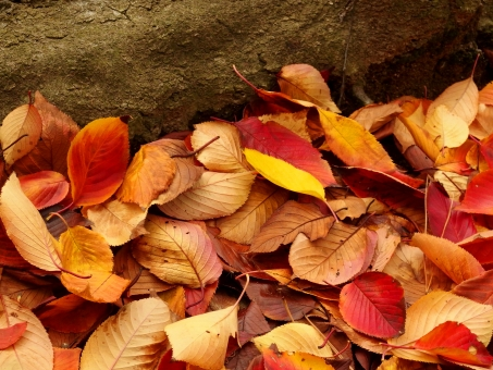 紅葉 落葉 赤 樹木 秋 黄 落ち葉 地面 根 木 樹木 カラフル 鮮やか きれい たくさん 多い 落着き しっとり 美しい 葉