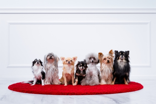 色んな犬の写真