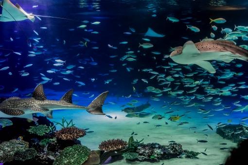 【水族館・サンシャイン水族館】水槽・魚の写真