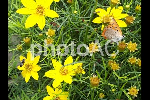 蝶と蜂の写真