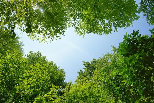 葉 緑 木 新緑 新芽 木の葉 自然 植物 屋外 背景 背景素材 テクスチャ テクスチャー バックグラウンド 光 青空 環境 エコ 木漏れ日 こもれび 枝 さわやか 爽やか 初夏 若葉 森 森林 林