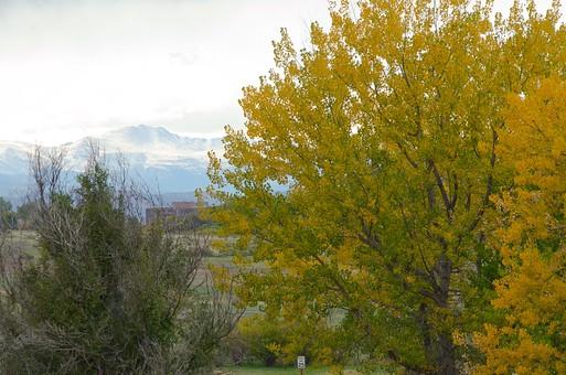 黄色く紅葉した木42