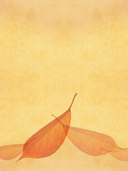 葉 落ち葉 枯れ葉 ドライリーフ 木の葉 素材 葉脈 植物 自然 ベージュ 黄色 オレンジ パターン 暖色 ナチュラル 暖かい 乾燥 空間 テクスチャ 質感 背景 背景素材 バックグラウンド テキストスペース コピースペース  半透明 秋 赤  紅葉  透ける 透かし 枠 フレーム