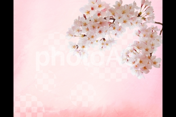 市松模様和紙背景と桜の素材の写真