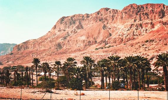 イスラエル 荒野 岩 石 山肌 岩肌 フェンス 空 緑 グリーン 木 草 自然 パームツリー ヤシの木 風景 景色 情景 荒れた むき出しの 旅行 観光 名所 外国 海外 異国