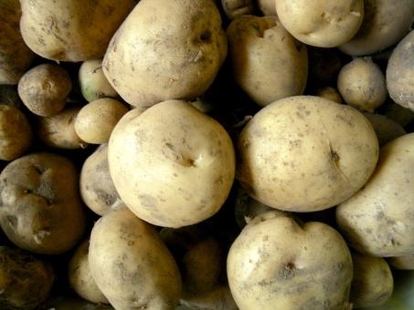 じゃがいも ジャガイモ 男爵 馬鈴薯 芋 野菜 いも サラダ 肉じゃが コロッケ 芋掘り 北海道 新ジャガ カレー シチュー