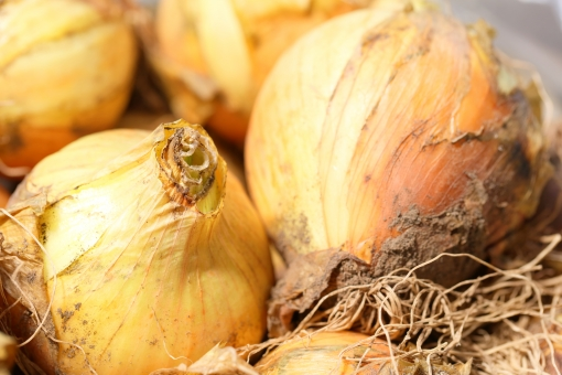 タマネギ 玉葱 食物 野菜 春 農業 料理 食事 球根 横位置 余白 キッチン 材料 カレー 肉じゃが レトルト 収穫 香辛料 スープ 甘味 サラダ 素材 ソフト