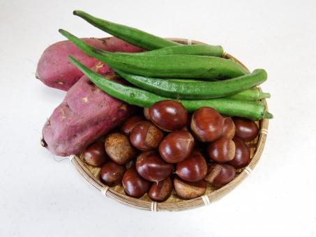 サツマイモ オクラ 栗 くり クリ 秋 収穫