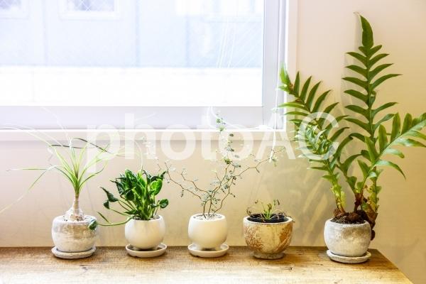 並んだ観葉植物1の写真