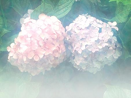 自然 ピンク 赤紫 白 緑 薄紫 6月 六月 花 あじさい 梅雨 青 植物 アジサイ 紫陽花 夏 初夏 きれい お花 季節 素材 フラワー テクスチャー テクスチャ バックグルアンド 薄い あわい テキストフレーム 淡い 花束 葉 曇り 雨 つゆ 雨音 フレーム 背景