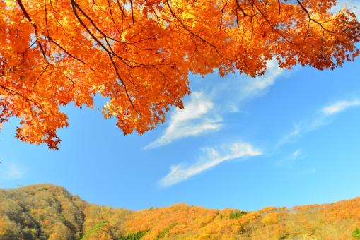 秋真っ盛り 紅葉の写真
