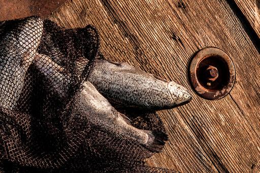 川釣り 河 川 桟橋 木 釣り フィッシング フライフィッシング 魚 釣り人 フィッシャーマン 趣味 ホビー 釣った魚 釣果 獲物 ニジマス 川魚 三匹 3匹 三尾 3尾 網 ネット 投げ釣り キャスティング