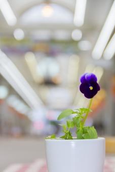 アーケード 商店街 花 花瓶 植物 テーブルクロス