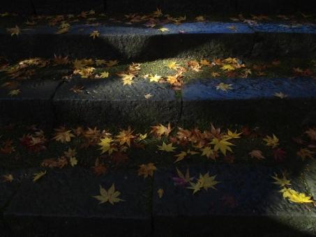 石段 落葉 紅葉 黄葉 秋 晴れ 木漏れ日 日ざし
