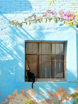 黒猫 猫 ねこ のらねこ 野良猫 青 家 窓 花 木 壁