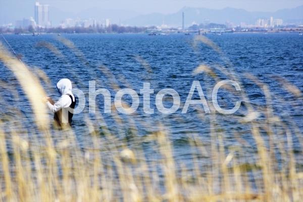 春の琵琶湖岸フィッシングの写真