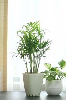インテリアグリーン 観葉植物 植物 ヤシの木 ポトス ポトスエンジョイ テーブルヤシ 室内観葉 夏のイメージ 植木鉢