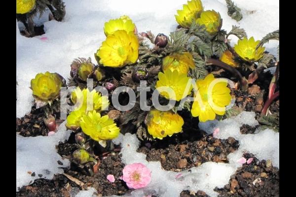 春の兆しの写真