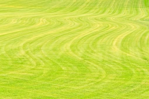 芝生 地面 天然芝 人工芝 芝 草っぱら 緑色 緑 一面 前面 背景 植物 葉 草 グラウンド 広場 大地 フィールド バックグラウンド 背景素材 テクスチャ テクスチャー パターン 単色 自然 新緑